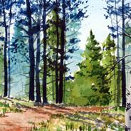 The Whiskey Mountain Trail - Transparent Award