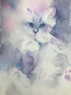 Suzanne's Kitty