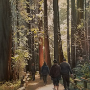 Reign Of The Redwoods Honorable Mention