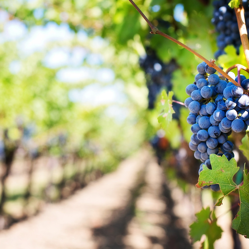 Pinot Wine Tasting & Hors d'oeuvres