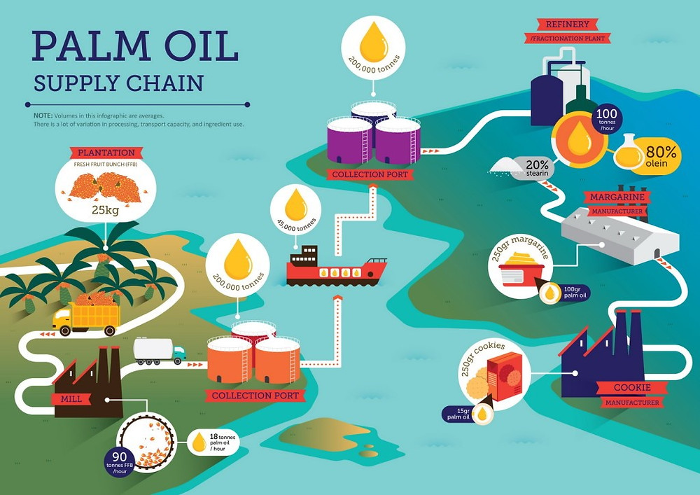 Processes in palm oil supply chain