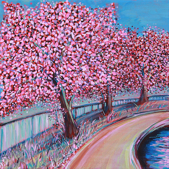 Three Cherry Blossoms 2019