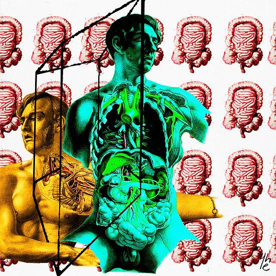 Anatomical 003