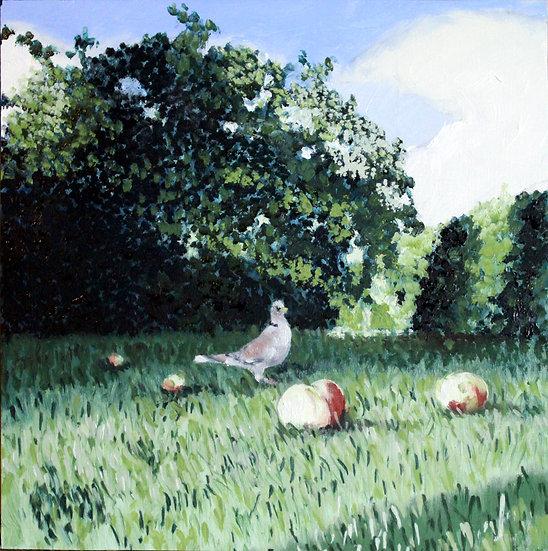 Balby Garden - Collared Dove