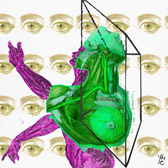 Anatomical 002
