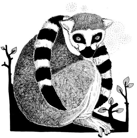 Lemur ©