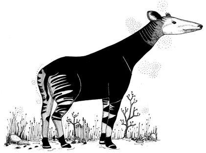 Okapi ©