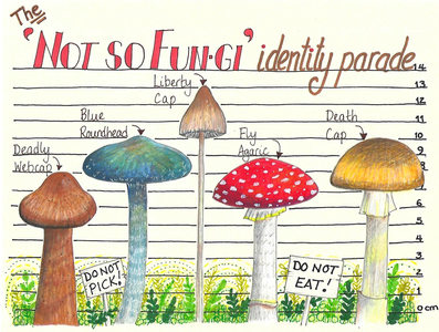 Fungi identity parade ©