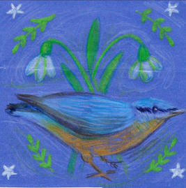 Nuthatch and snowdrops ©