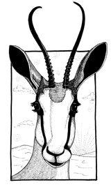 Gazelle ©