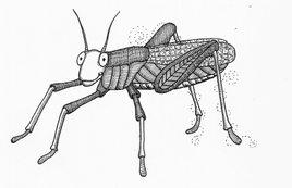 Grasshopper ©