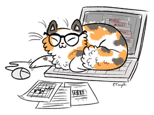 accounting cat.jpg