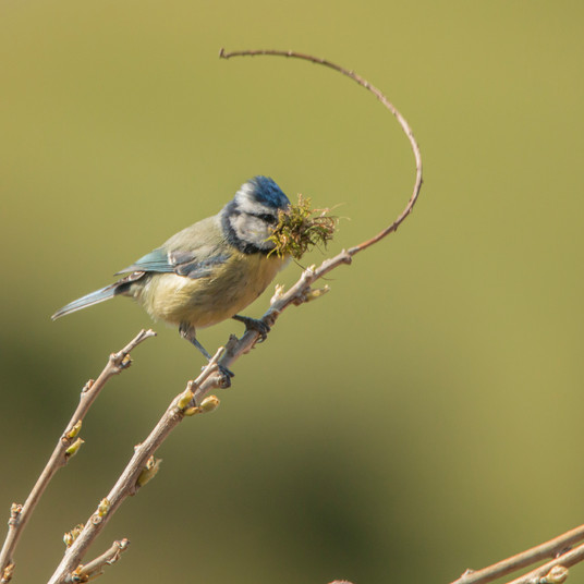 Aaron Sterling Wildlife Photography UK