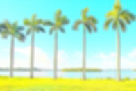 Palm-Trees.jpeg