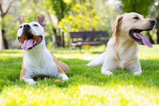 dogparkdogs 2.jpeg