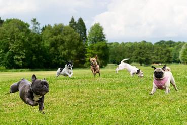 dogparkdogs 1.jpg