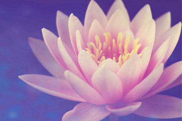 aquatic-aquatic-plant-bloom-557907.jpg