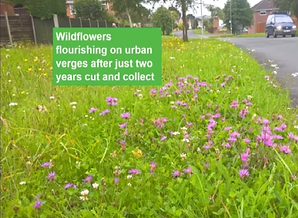 Dorset verge 2 yr example.png