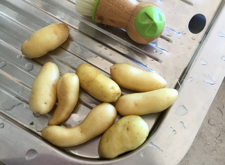 KIPFLER POTATOES - grow in your urban yard