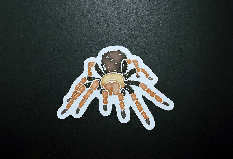 Desert Blonde Tarantula Sticker