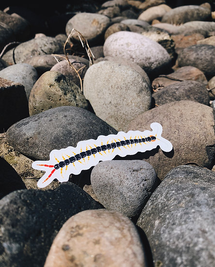 Scolopendra Subspinipes Sticker