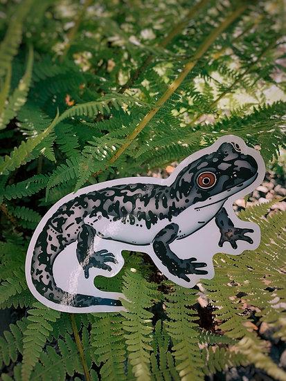 Giant Pacific Salamander Sticker