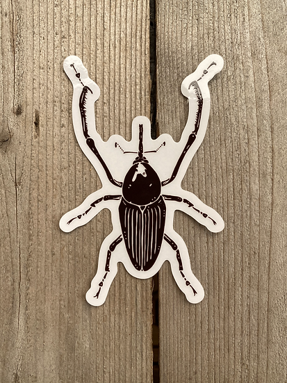 Giant Bamboo Weevil