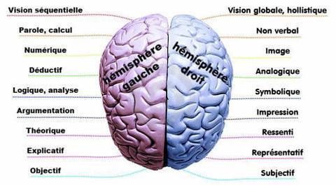 thérapie cerveau.jpg