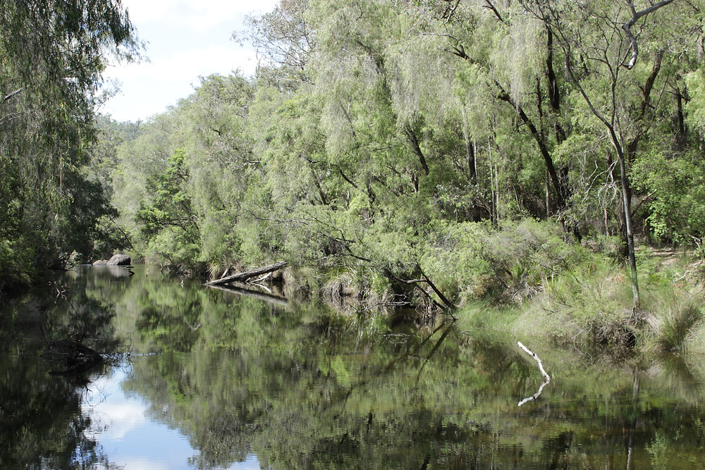 Clam, still, clear, peaceful Collie River