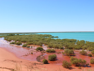 Blog 25: Western Australia - Broome to Fitzroy Crossing