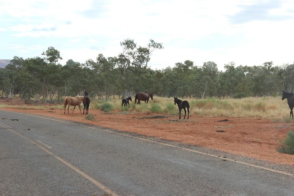 Road Horses