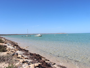 Blog 22: Western Australia - Geraldton to Denham