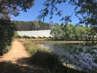 Blog 6: Tasmania - Devonport to Leven Canyon
