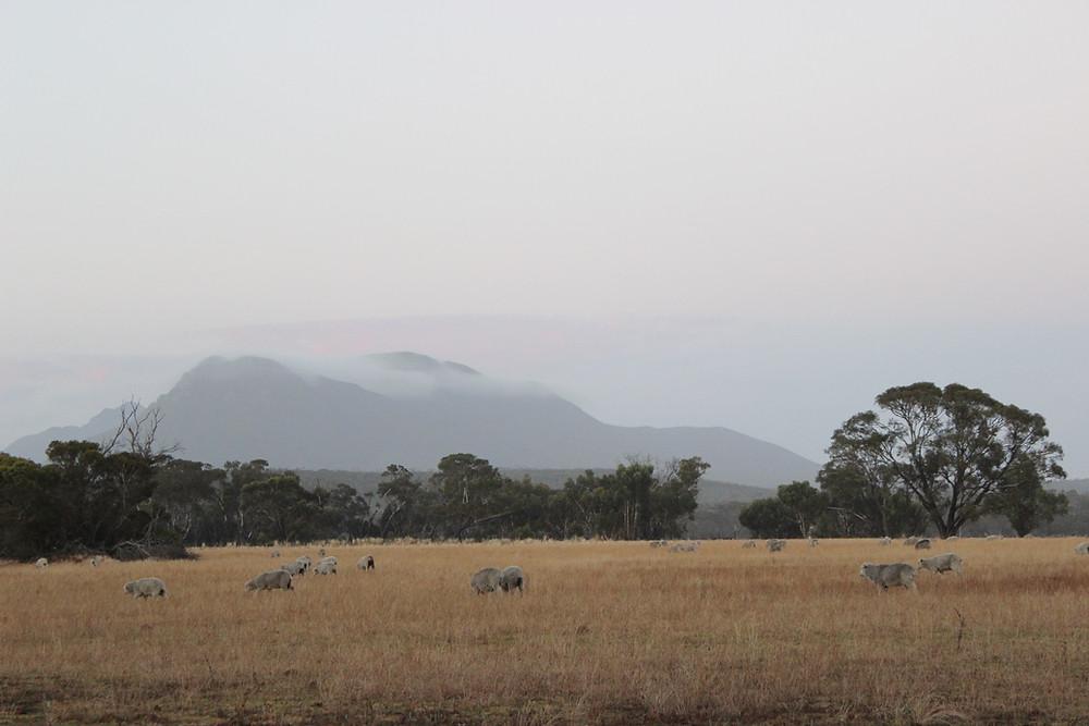 Stirlign Ranges Dawn