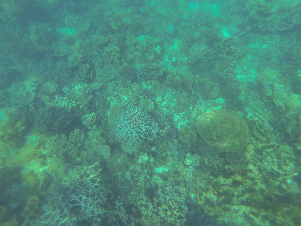 many corals