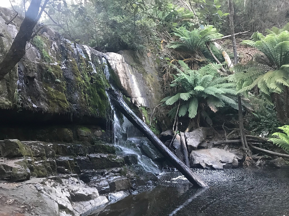 Lilydale First Falls