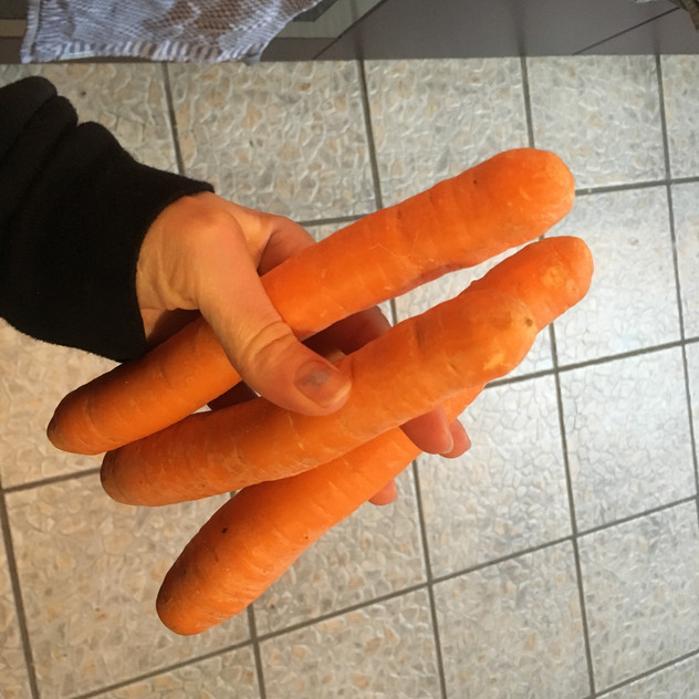 funny round carrots