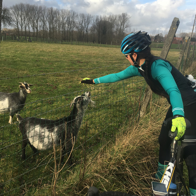 goats along the ride