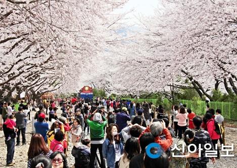 진해군항제 전국민 축제로 급부상… 252만명 발걸음