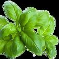 Fresh-Basil-070917-crop-web.png