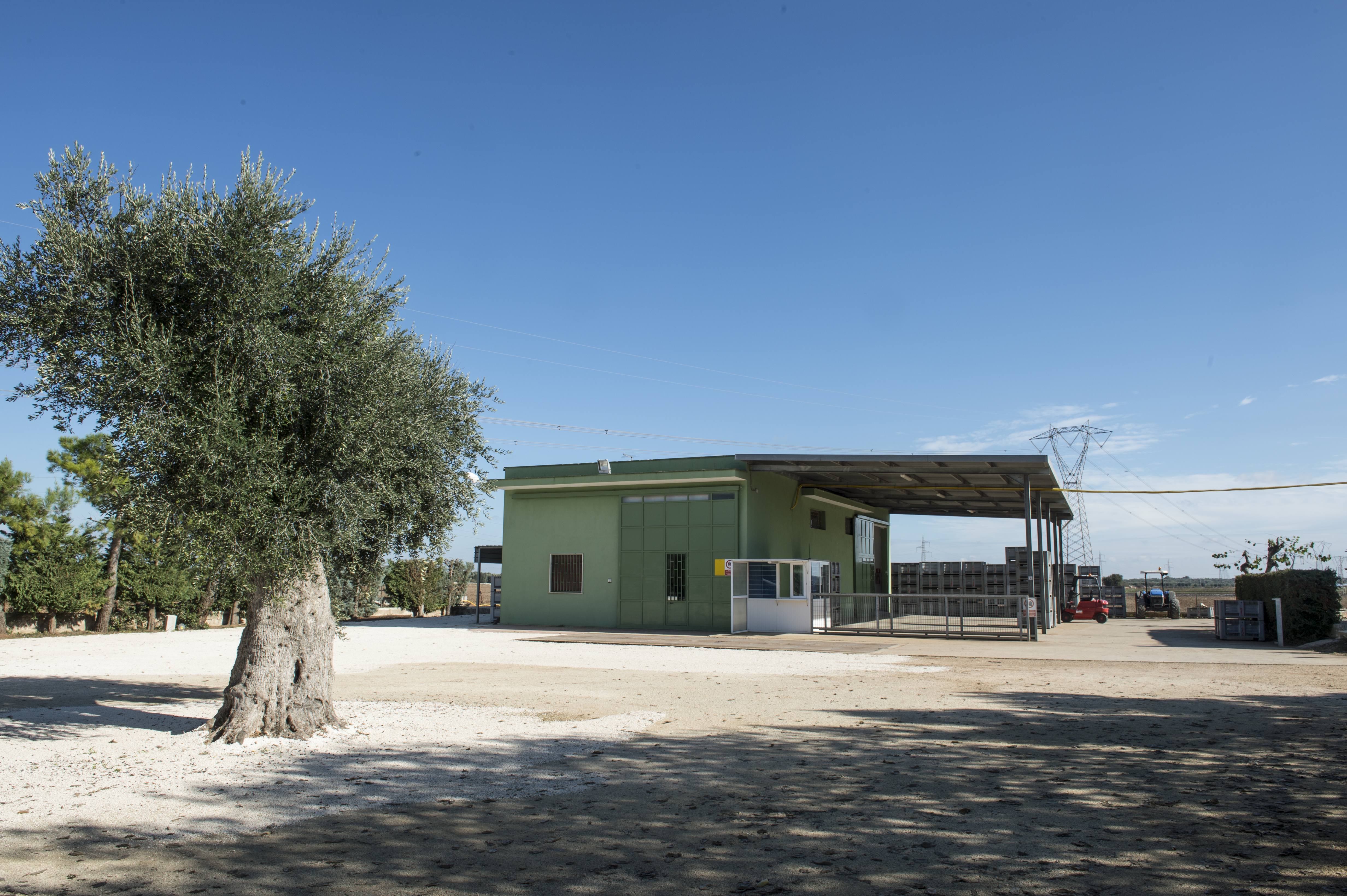 olivo Sant'oro