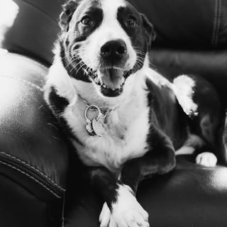 Pet Photography by Diana Johnson