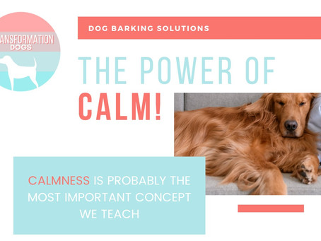 The Power Of Calm!
