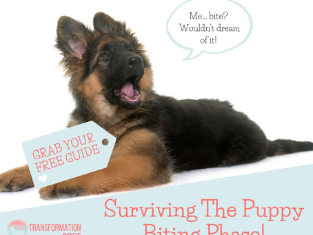 Surviving the Puppy Biting Phase!