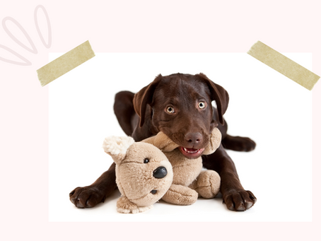 Five Ways To Immediately Improve Your Puppy's Behaviour