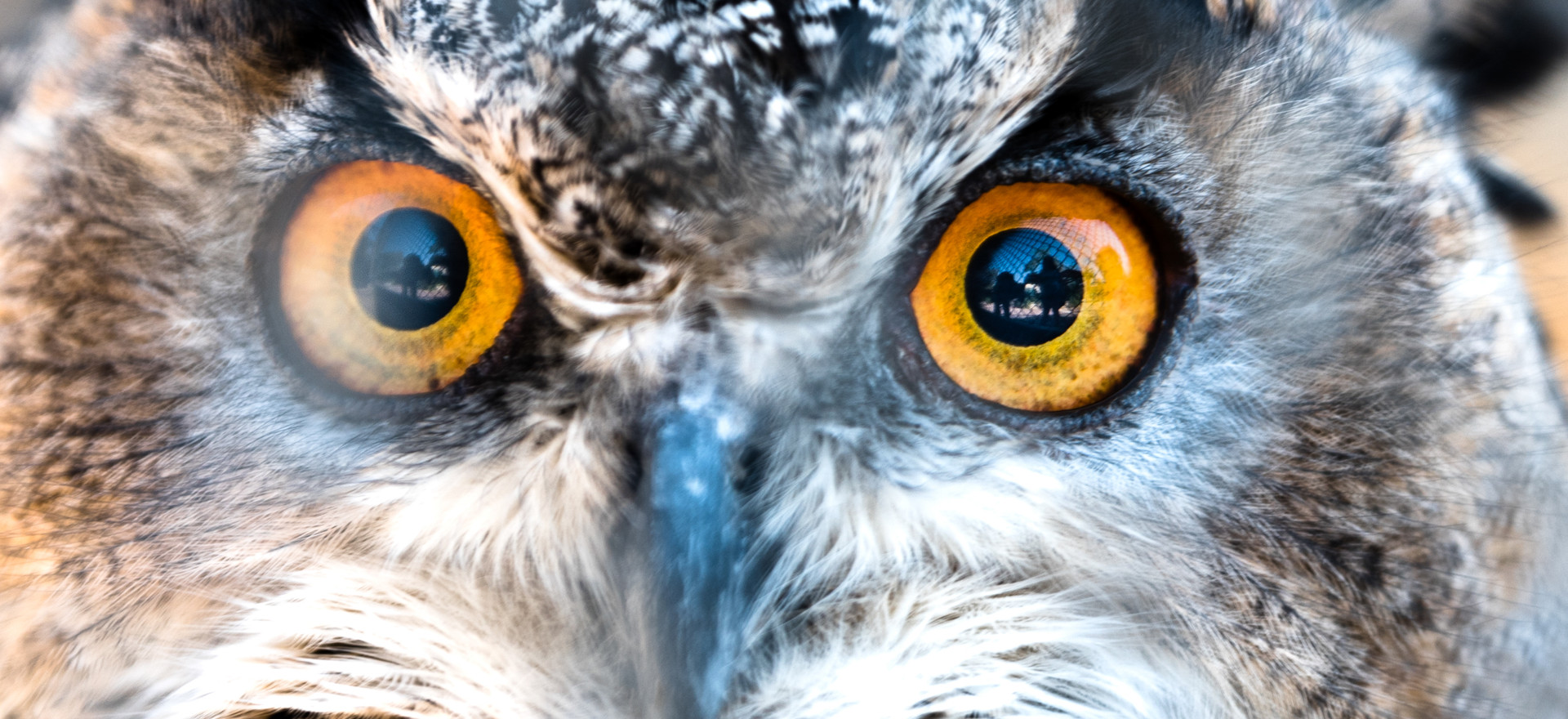 I've Got My Eyes On You