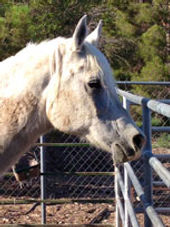 why ranch, horse therapy, diamonds in the rough, youth organizations, nonprofit, las vegas