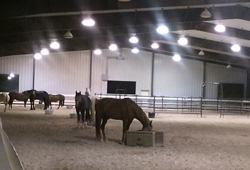 why ranch, our herd, horse therapy, children with special needs, youth organization, nonprofit, las vegas