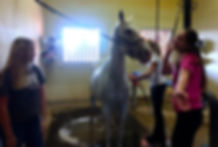 why ranch, youth, children, horses, youth organizations, nonprofit, las vegas
