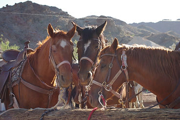 why ranch, horse therapy, youth organization, nonprofit, las vegas